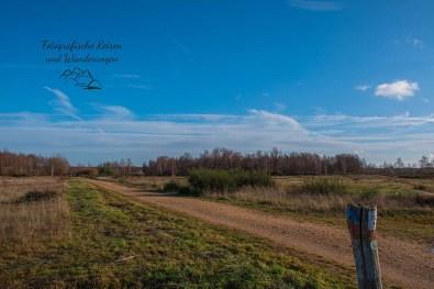 Wege in der Drover Heide im Winter