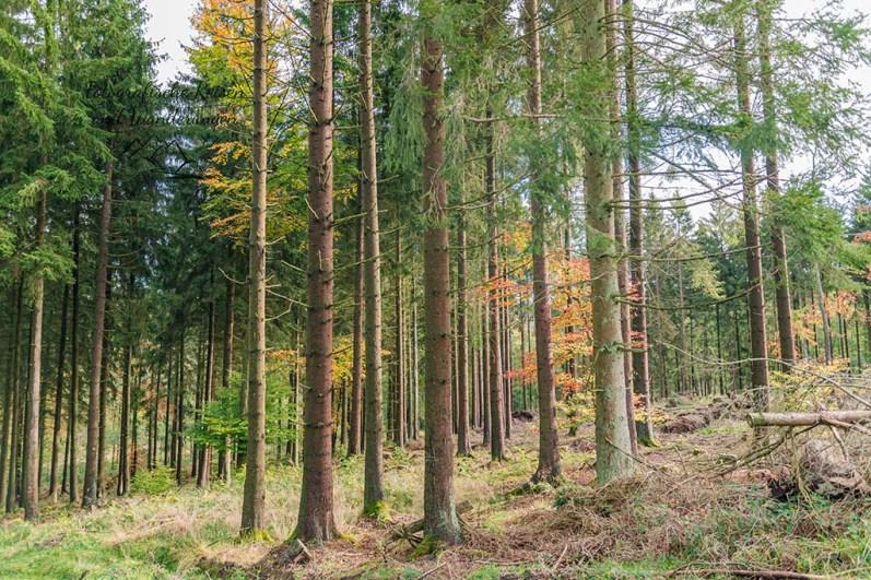 Blick durch die Baumreihen