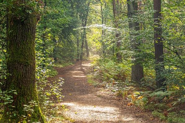 Waldwege auf der Teutoschleife