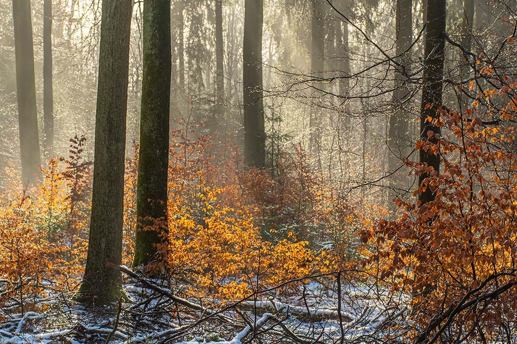 Sonnenlicht und Nebel