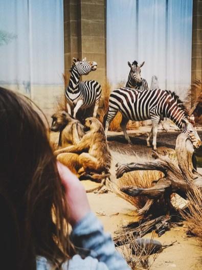 Savanne im Koenig Museum