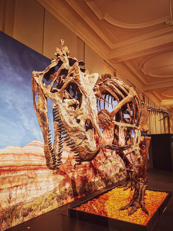 Dinosauerier im Das Zoologische Forschungsmuseum Alexander Koenig