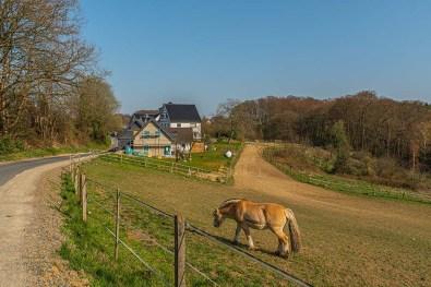 Alte Wege bei Offermannsheide (134)