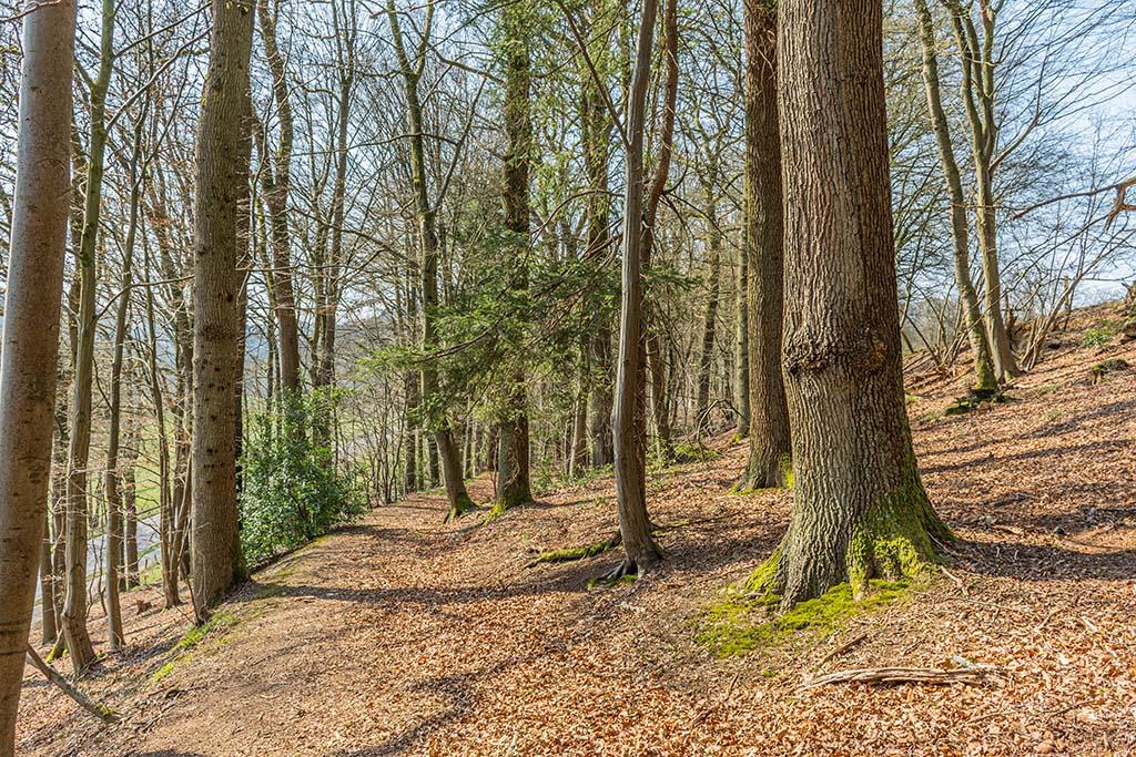 Frühjahrswaldweg