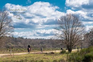 Auch Reiter waren unterwegs in der Wahner Heide