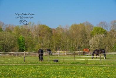 Pferdewiesen Kurtekotten