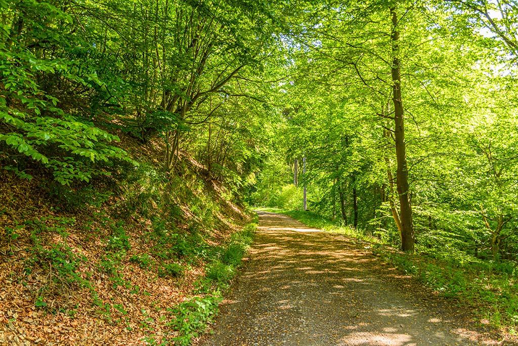 Wandern zwischen Decke Tönnes und Michelsberg