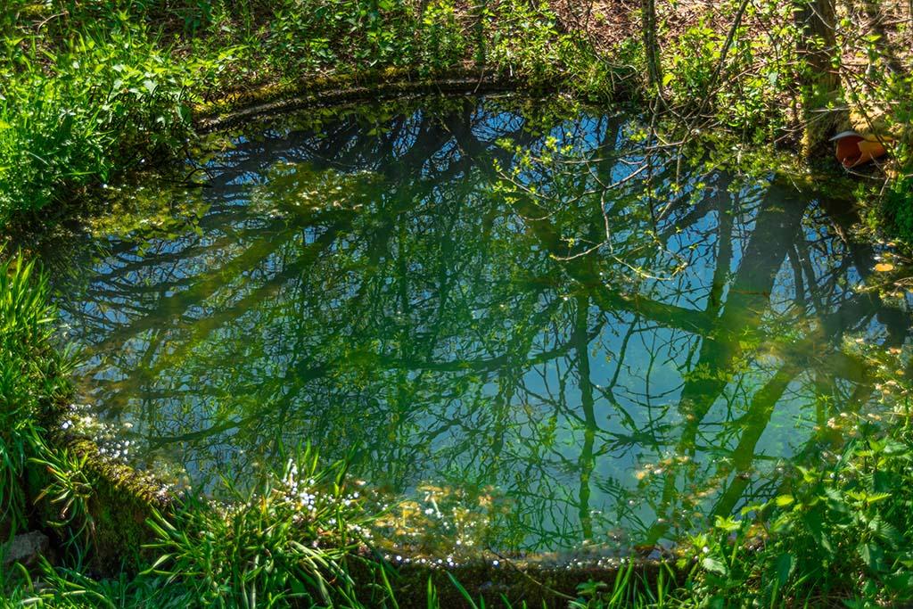 Wassertrog der grün schimmert