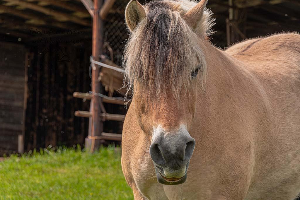 Pferdchen für Tanja