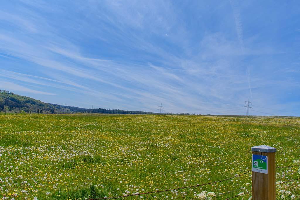 Blumenwiesen auf der Görresburg