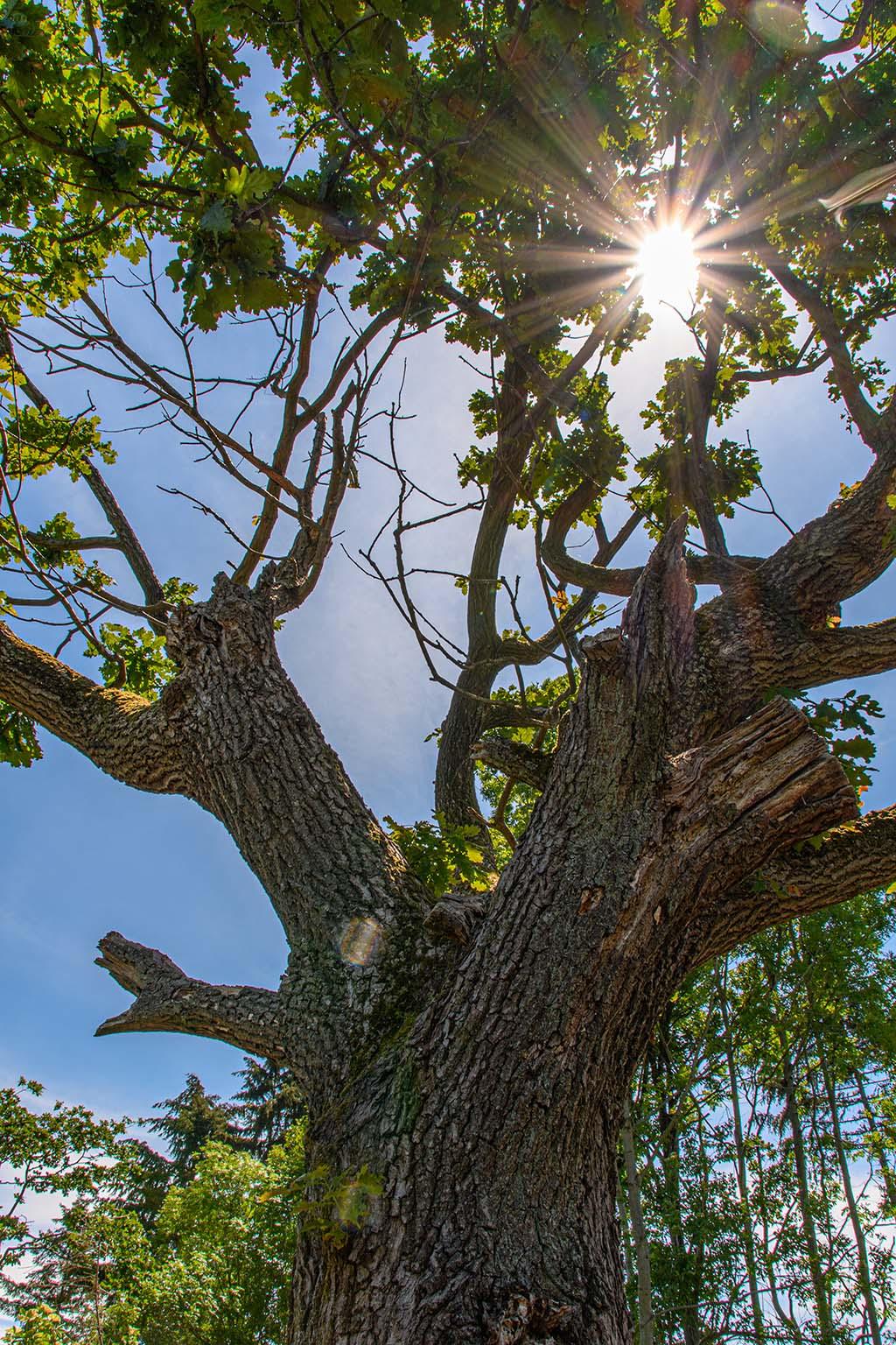 Rund um den Minderberg - Sonne blitzt zwischen Zweigen