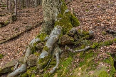 Wanderungen für die Seele Pfalz - Baumwurzeln