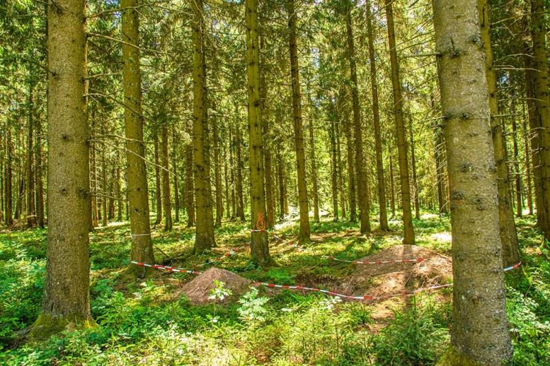 Eingezäunte Stelle im Wald