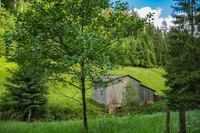 Typische Hütte auf Wiesen im Schwarzwald