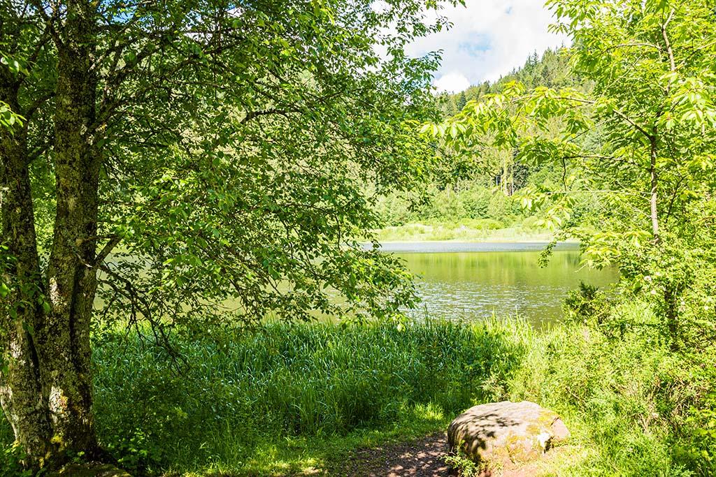 Ein letzter Blick auf den Sankenbachsee