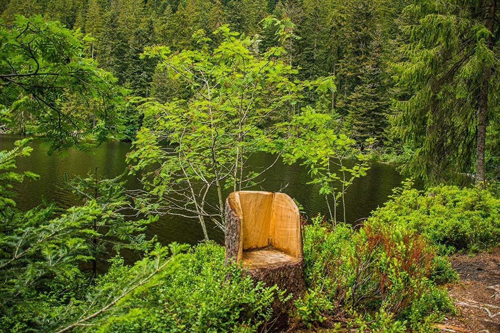 Sitzplatz in Heidelbeeren