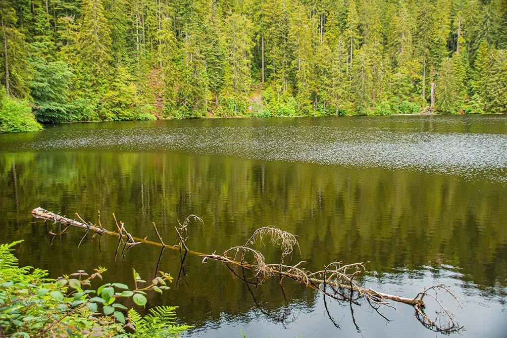 Rund um den Glaswaldsee
