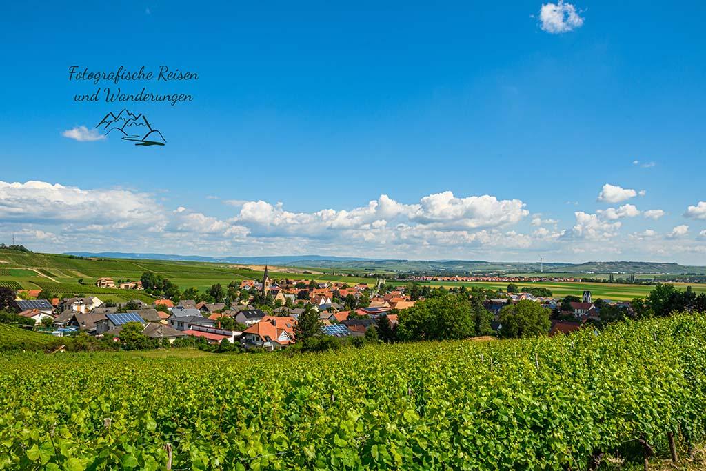 Blick auf Siefersheim