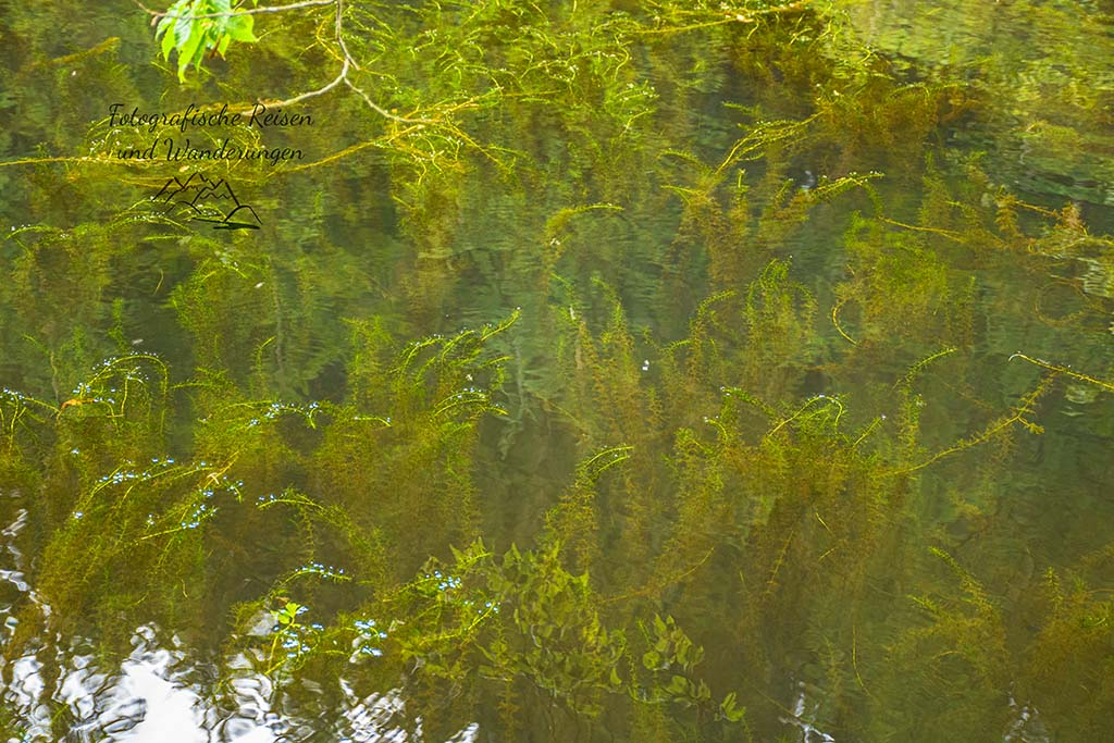 Teich mit Grünen Algen