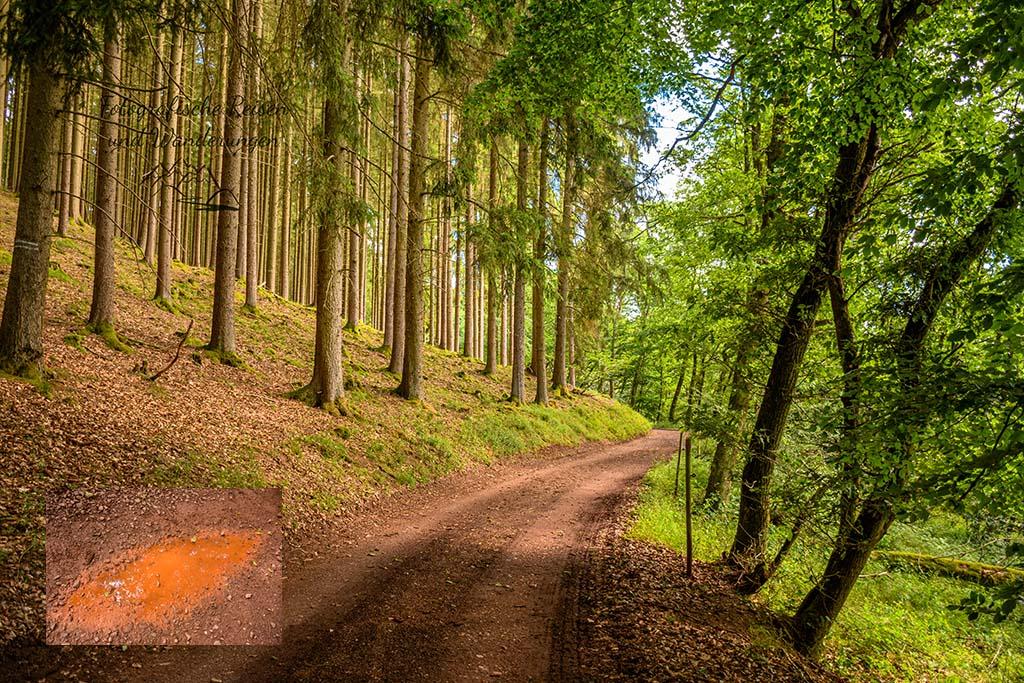 Waldweg mir roten Pfützen