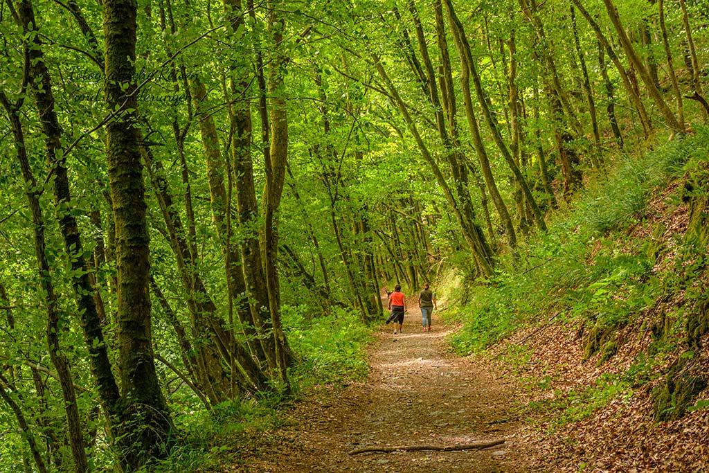 Waldweg - Rockenburger Urwaldpfad