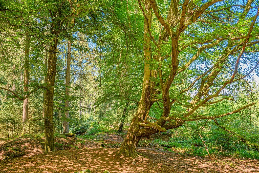 Krumme Bäume