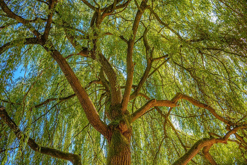 Blick in den Baum