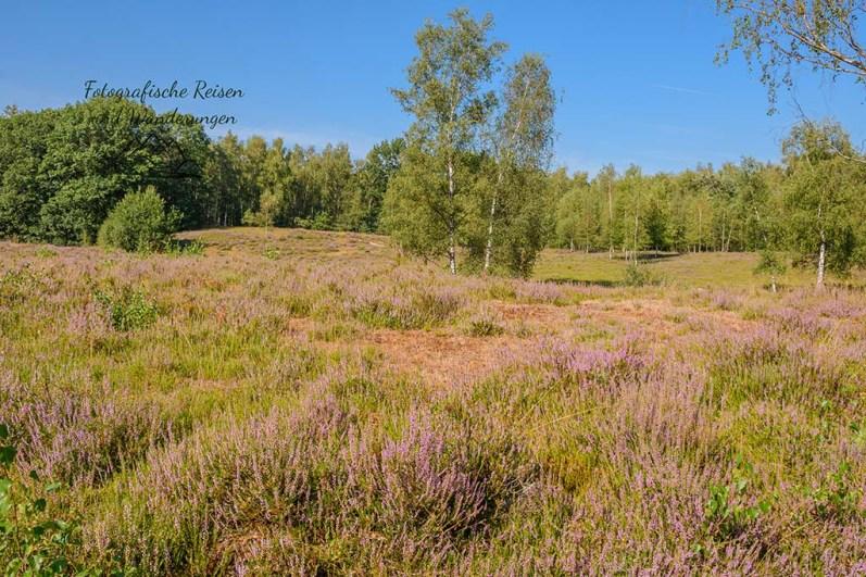 Heideflächen