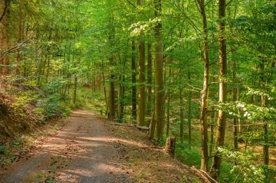 Weit schauen auf Waldwegen