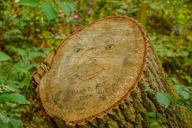 Gesicht im Baumstumpf