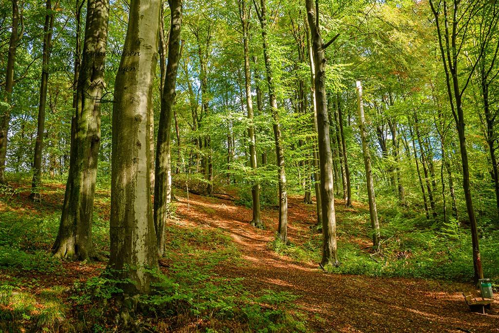Sonniger Herbstwald