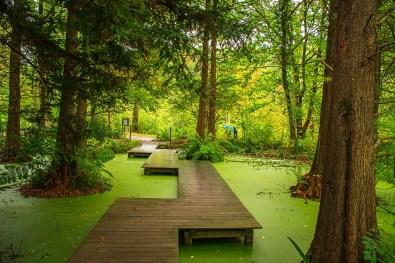 Tertiärteich im Botanischen Garten Bochum
