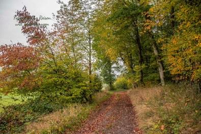 Links und rechts Herbstbäume