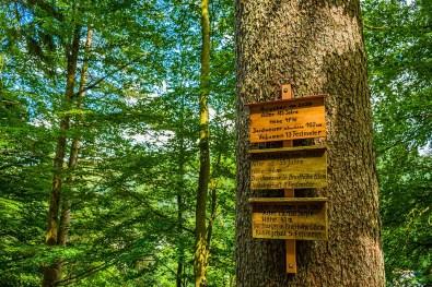 """Alter Baum unter Schutz """"Naturdenkmal"""""""