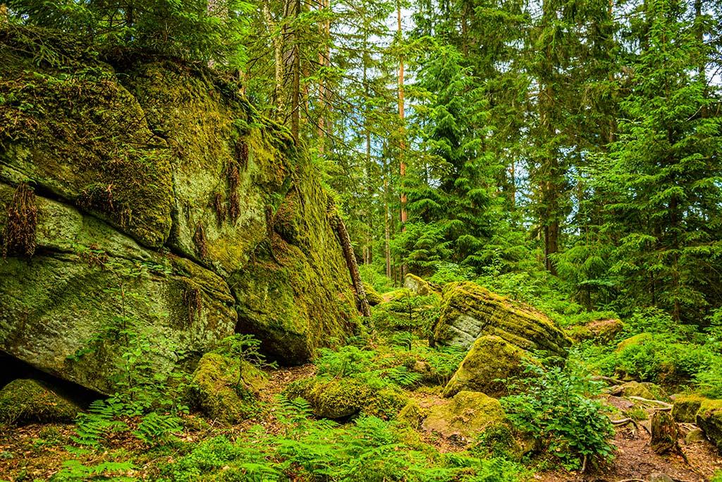 Felsenwege auf dem Genießerpfad Heidelbeerweg Enzklösterle