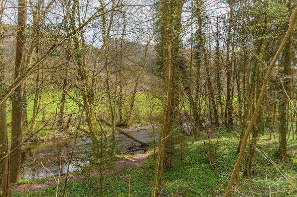 Hellgrüner Waldteppich