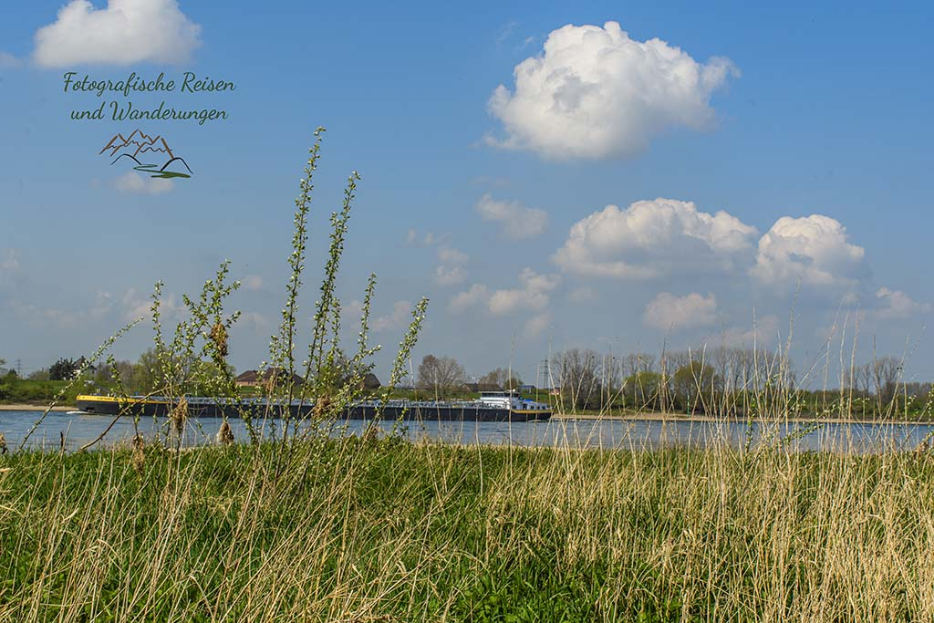 Am Rhein in Monheim