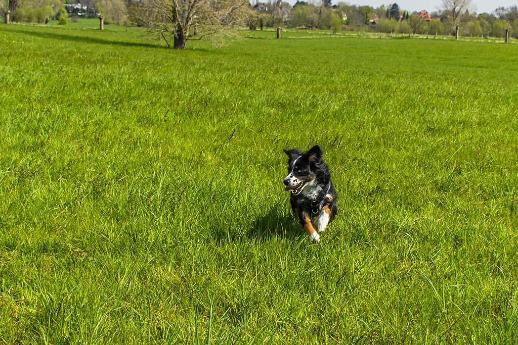 Hund auf Wiese - Urdenbacher Kämpe im Frühjahr