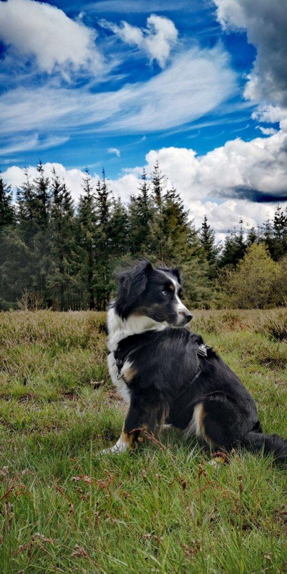 Jana in der Eifel-Die Eifel ruft
