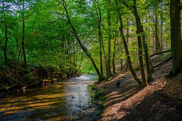 Wanderung am Eifgenbach
