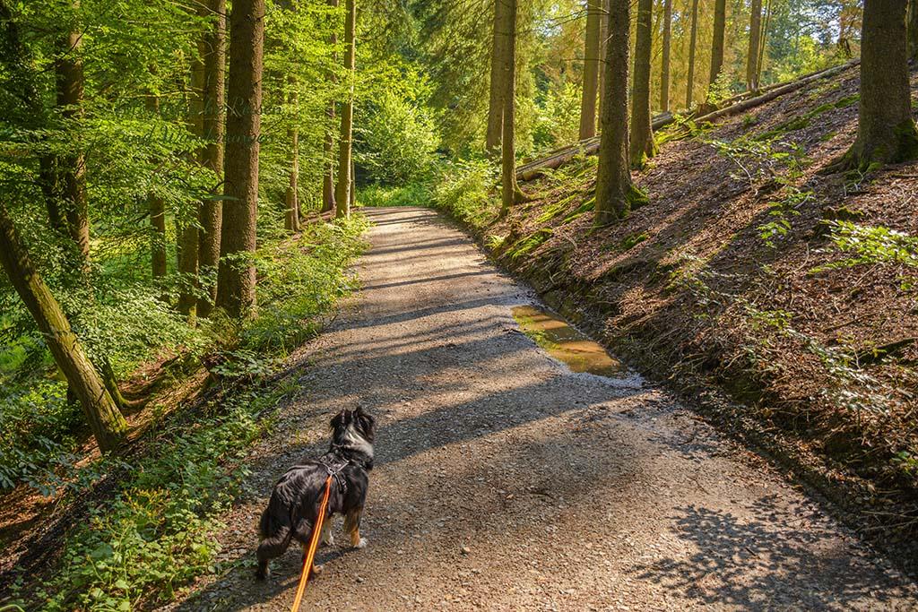 Waldweg + Hund an Leine