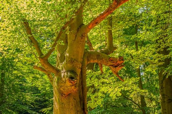 Herrlich alte Bäume
