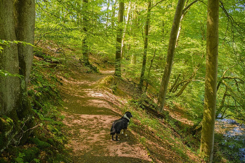 Wald Richtung BErger Mühle