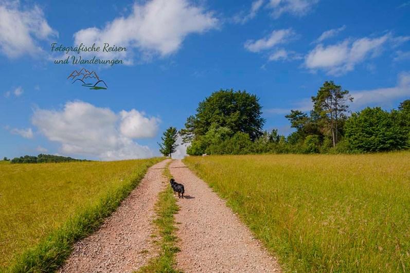 Feldweg mit Hund