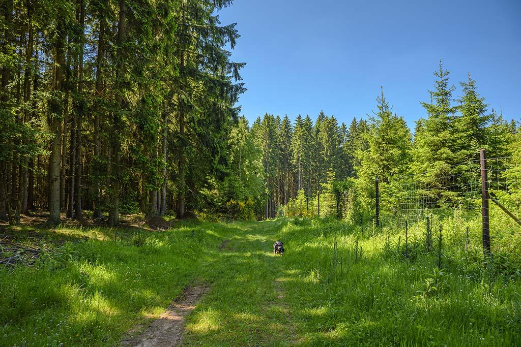 Wald- und Wiesenweg