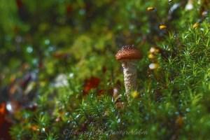 Pilz nach Regen im Wald