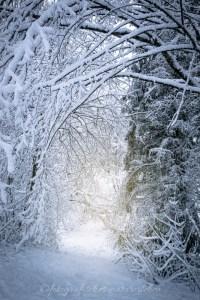 schneebedeckte Äste
