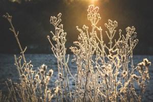 Pflanzen mit Frost bedeckt