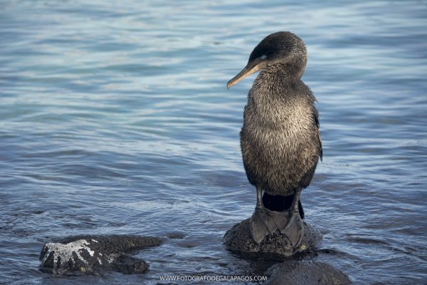 Galapagos - photography
