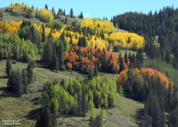 Aspen-04-yellow-red
